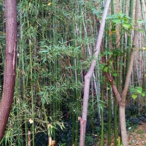 伐採した真竹の使い道と自然農法