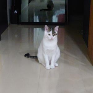 子猫のカツオ君の里親様募集中です。