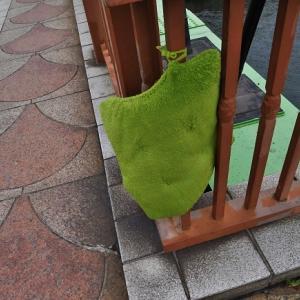 川辺の緑ちゃん