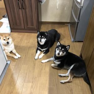 キッチン見守り隊&散歩待ちはニュースを見る