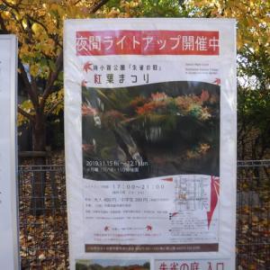 紅葉見物は京都でね。
