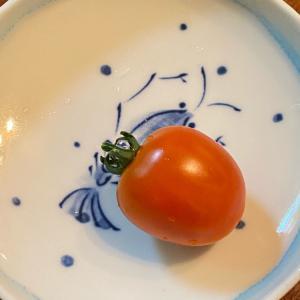 初収穫!ミニトマト