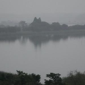 霧に霞むネコの木、微かに見える対岸