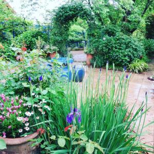 令和初日の庭