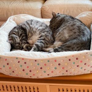 がばっと起きちゃうので & ランタン猫電車