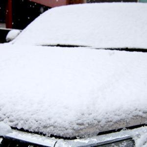 32年ぶり⁉ 東京まさかの春の雪!