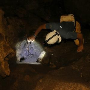 洞窟で暮らす新種のアシナガアリ!?