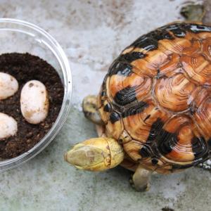 卵の殻でカルシウム補給