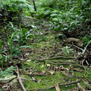 アリを探すのにジャングルをホウキで掃除!?