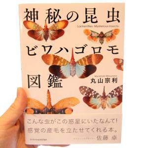 美しい!「神秘の昆虫 ビワハゴロモ図鑑」