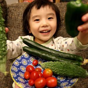 ベランダ野菜収穫