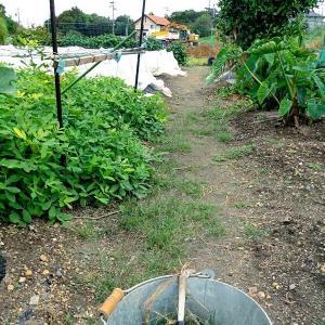 除草とイチゴのこと