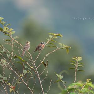 皇鈴山の野鳥