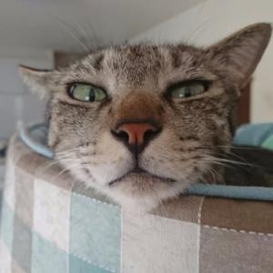 今日は猫ちゃんグッズのご紹介の日です!!