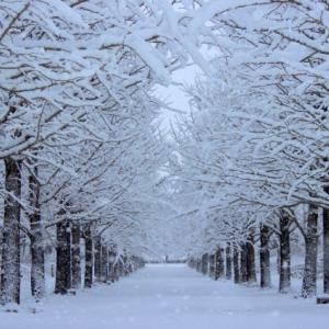 冬のソナタ・・・今ふたたびあの名作がよみがえる・・・