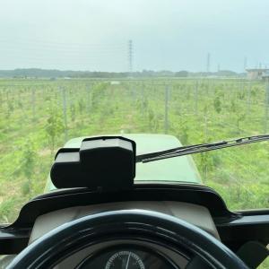 ブドウ畑の除草作業。