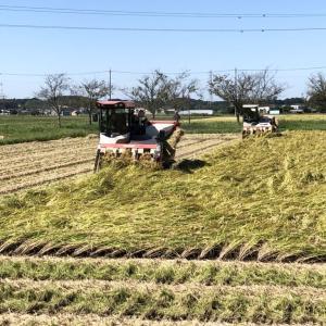 稲刈りまだまだ続く