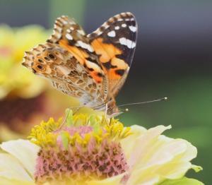 「花と蝶」は綺麗に舞う、、。