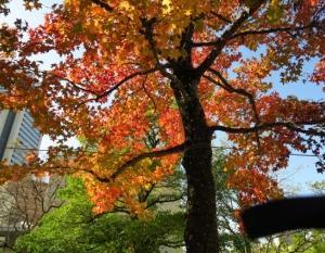 紅葉、、。
