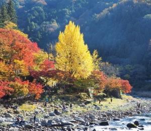 香嵐渓の紅葉にぶらり~、、。