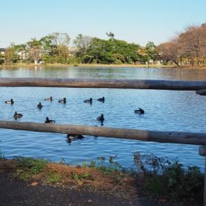 冬の池、、。