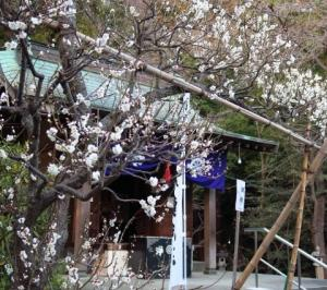 不動尊に梅が咲き揃う、、。