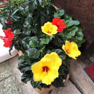 南国のお花♡