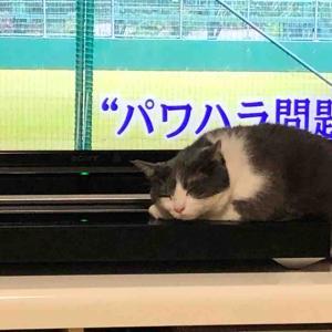 『ペット博名古屋!!』