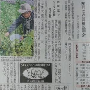 伊豆新聞掲載=南伊豆でソラマメ収穫