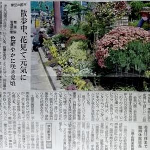 伊豆新聞掲載=散歩中、花見て元気に