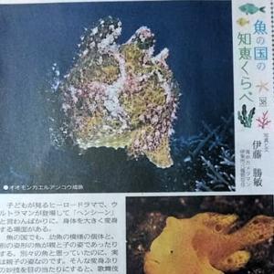 伊豆新聞掲載=魚の国の知恵くらべ