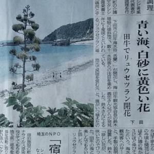 伊豆新聞掲載=青い海、白砂に黄色い花