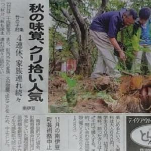 伊豆新聞掲載=秋の味覚、クリ拾い人気