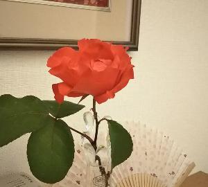 バ~ラが咲いた~