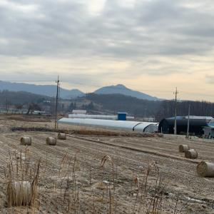 田舎の散歩、冬の風景