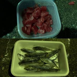 【城ヶ島・三崎港・北条湾】久しぶりに北条湾でサビキ以外の釣りをしてみました(2020年1月19日)