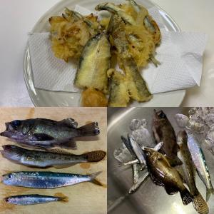 【城ヶ島・三崎港・北条湾】典型的なハズレの釣行でしたが何とか落ちハゼをGET!(2021年1月31日)
