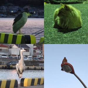 釣り場のゴミと北条湾にいる動物について