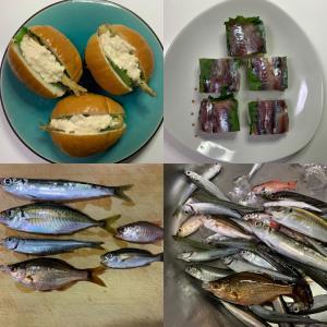 【城ヶ島・三崎港・北条湾】魚種は豊富に釣れましたが…(2021年10月17日)