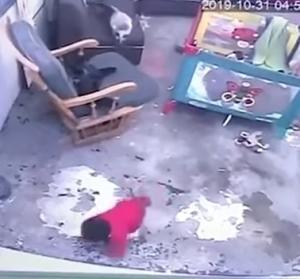 猫が赤ちゃんを階段に落ちないよう守った