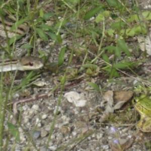 蛇と蛙が睨み合う原因を解明
