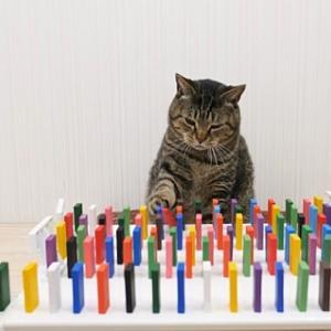 猫がドミノ倒しに絡む動画