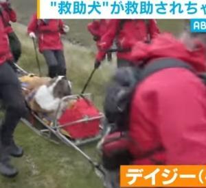 山岳救助犬が救助された