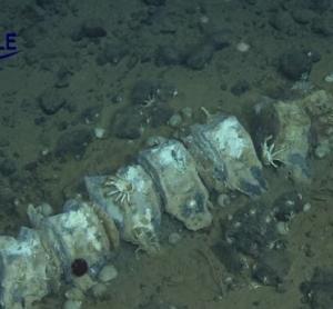 ブラジル沖4202mの鯨骨群集動画