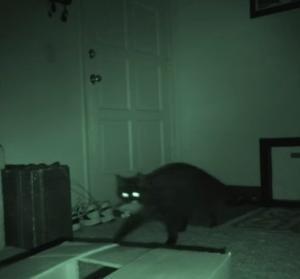 猫が夜していることを暗視カメラで撮影