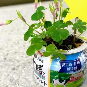 おなじみの容器×雑草=カワイイGREENの作品♪