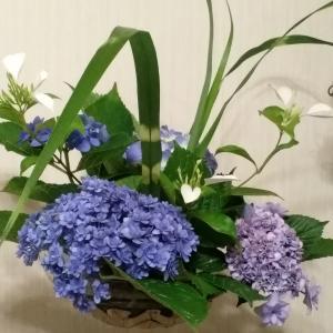 庭の紫陽花とハンカチ草で