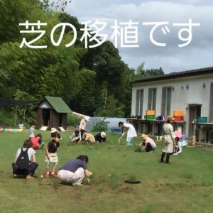 保育園の園庭に芝を植えるボランティア