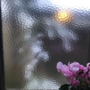 朝の雪 雪持ち笹^_^