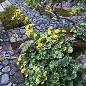 弘道館炉開着物4様のコーデ 素晴らしい紅葉のお庭